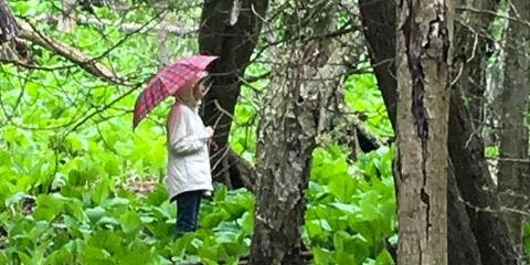 Forest Bathing in Glen Stewart Ravine - those with pain & fatigue limits