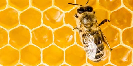 """Can AI Help Stop Bee Extinction to Save the Planet and Humanity?"" 17th September 2019 tickets"