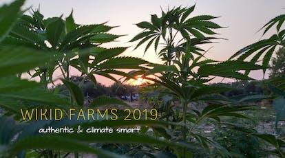 MEDICINAL CANNABIS PORTUGAL 2019 - WIKID Farms Private Tour tickets
