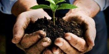 Master Gardener Informational Session 6:00-7:00PM