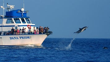 Evening Whale & Dolphin Watching