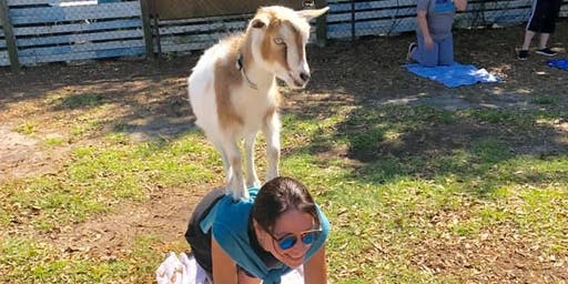 Goat Yoga Tampa plus free drink!  Cage Brewing St. Pete