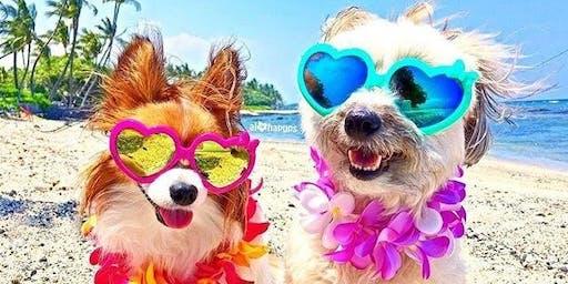 ALOHA DOG FUN IN THE SUMMERTIME