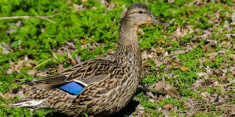 Vernissage : les oiseaux du Québec billets