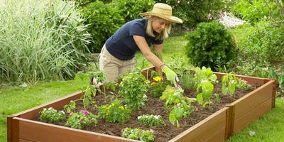 Gardening with the MGs: Thinking Inside the Box: Raised Bed Basics