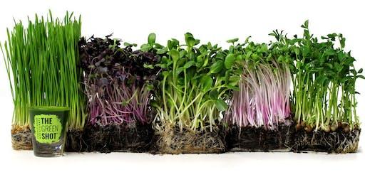 Wheatgrass, Microgreens & Raw Food Diet