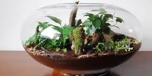 Gardening with the MG's: Terrariums – Gardening Under Glass