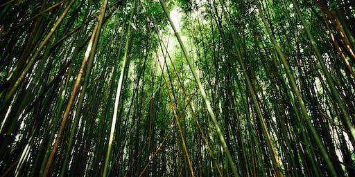 Nature Photography Hike: Bamboo Forest