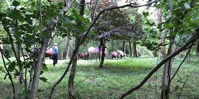 Forest Bathing with Horses, 28th Aug 6.30pm-9pm