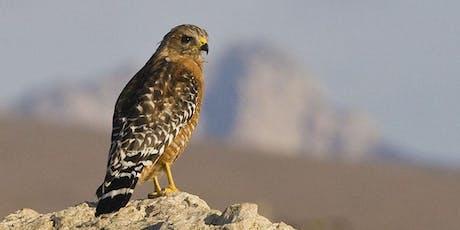 Audubon Bird Walk at San Luis Obispo Botanical Garden tickets
