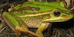 Wildcare Friends of Devonport Reserves – Mary Binks Wetland