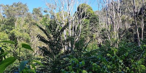 Restoring Rainforests Field Day