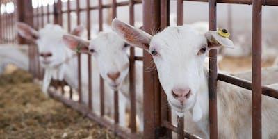 Transitie Veehouderij: van aanvraag tot vergunning | OMWB on Tour