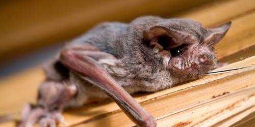 Bats of Florida