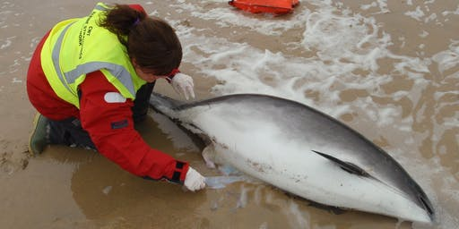 Marine Strandings Network - Callout Volunteer Training