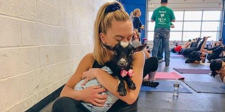 Goat Yoga Instructor Spotlight: Danielle Bejian tickets