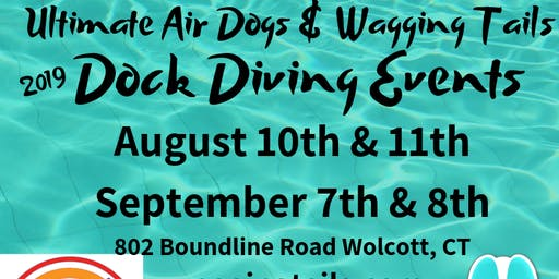 Dock Diving for Dogs Event