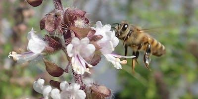Basic Beekeeping