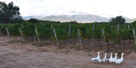 Bolivian Wine Tasting tickets