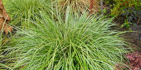 Ornamental Grasses - CH tickets