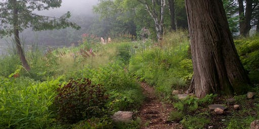 Wildscaping: An introduction to naturalistic plant-driven design