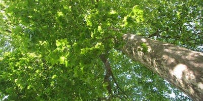 Mindfulness in the park, led by Huw Griffiths in Sydney Gardens Bath