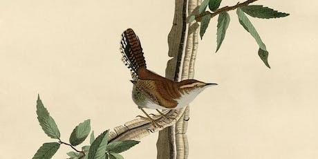 Illustrateurs d'oiseaux billets