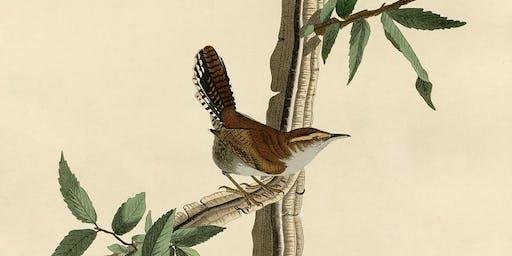 Illustrateurs d'oiseaux