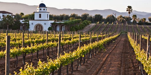 Baja Wine Tour starting from Rosarito Beach