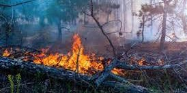 Landscaping Workshops -  Kootenai County FireSmart