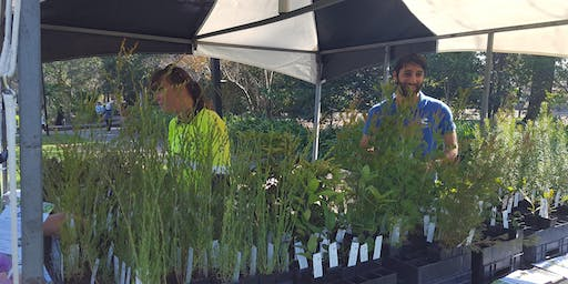 Free Native Plants Giveaway - Cumberland Council