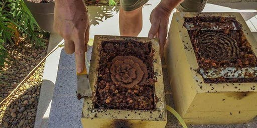Stingless Bee Hive Splitting & Harvesting