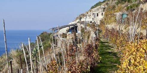 Explore wines from small Islands in Italy