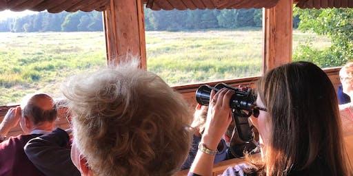 Hirschkonzert im Darßwald | Fahrradexkursion
