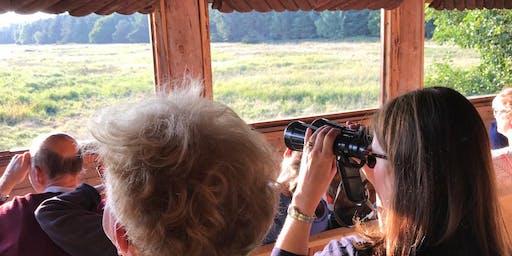 Hirschkonzert im Darßwald | Kutschexkursion