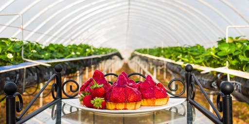 """""""A Berry Good Journey from Plant to Plate"""" Talk"""