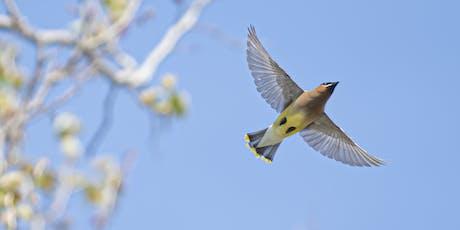 Tamron Birding Photography Workshop at Kensington Metro Park tickets