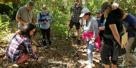 Site-Seeing with an Archaeologist: Native American Sites of Pinellas County  tickets