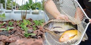 Hawaii Aquaculture & Aquaponics Association 2019...