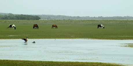 Wild Ponies of Chincoteague tickets