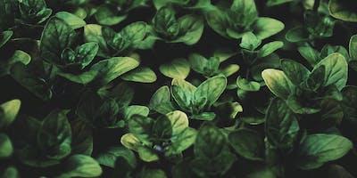 Strawbale Gardening @ Devonport Library
