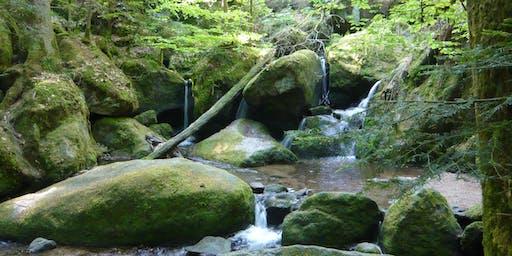 Single-Wanderung/Pressetour Geroldsauer Wasserfälle - Kreuzfelsen (30+)