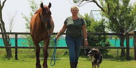 Stel je eigen AHBO box samen voor paard en hond tickets