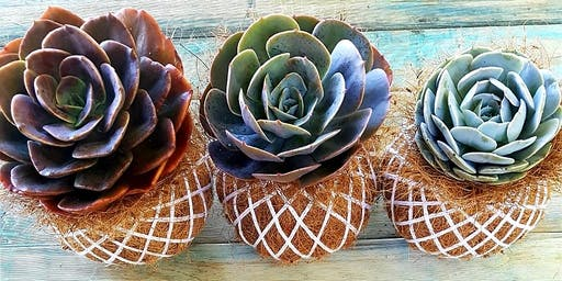 Succulent Cocodama Workshop