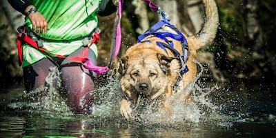 Camp Canis und der Olymp - Das Triple 2020 | Cuxland Sa, 5. September 2020