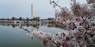 Volunteer: Community Tree Planting - Martin Luther King Jr. Memorial