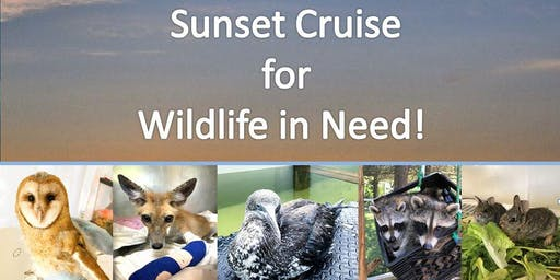 Copy of Sunset Cruise for Wildlife  in Need