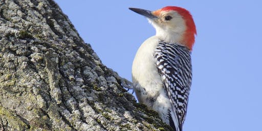 Birding in Peace