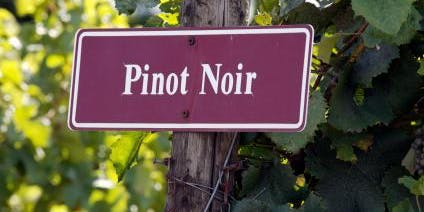 National Pinot Noir Day Wine Tasting