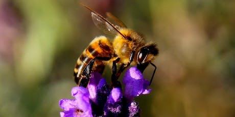 Powerful Pollinators tickets